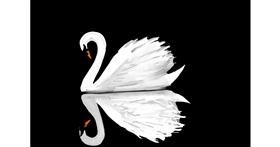 Swan drawing by Rose🦋