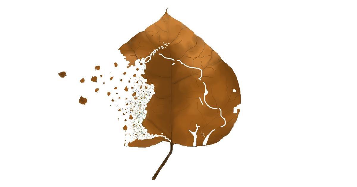 Drawing of Leaf by jule