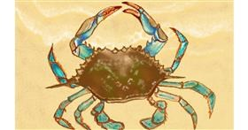 Drawing of Crab by Tim