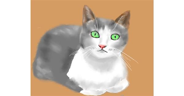 Cat drawing by Cec