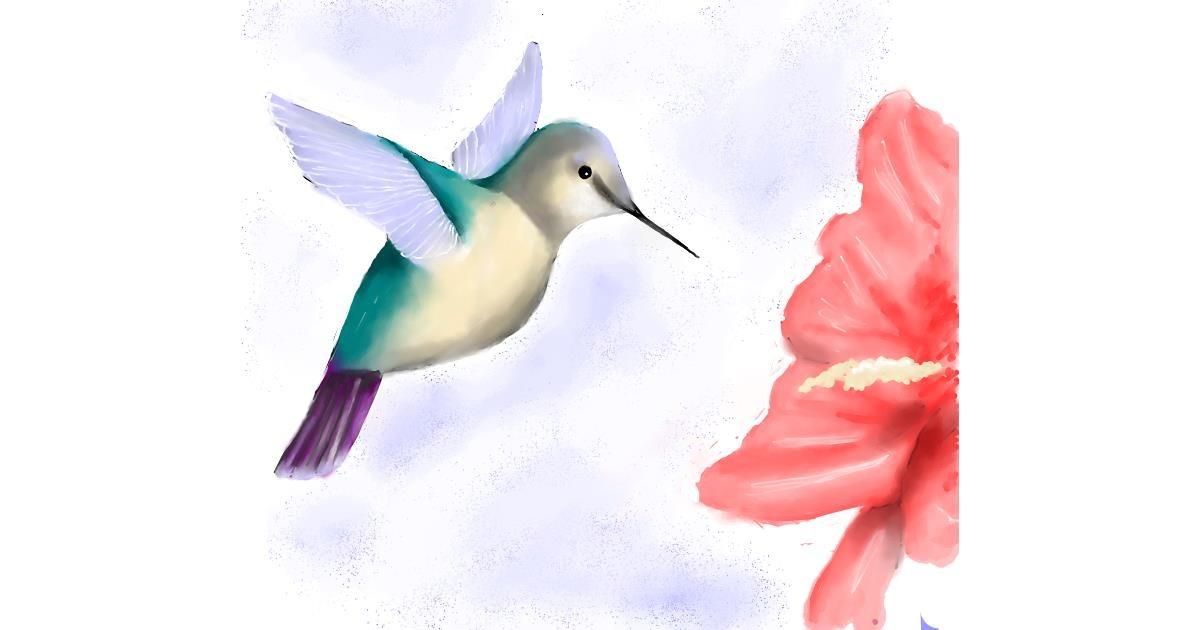 Hummingbird drawing by JSim