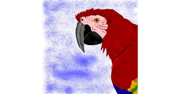 Parrot drawing by Korea