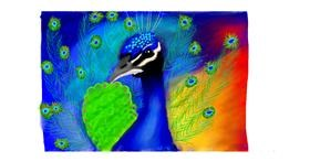 Drawing of Peacock by Sara