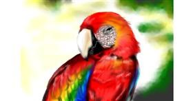 Drawing of Parrot by RadiouChka
