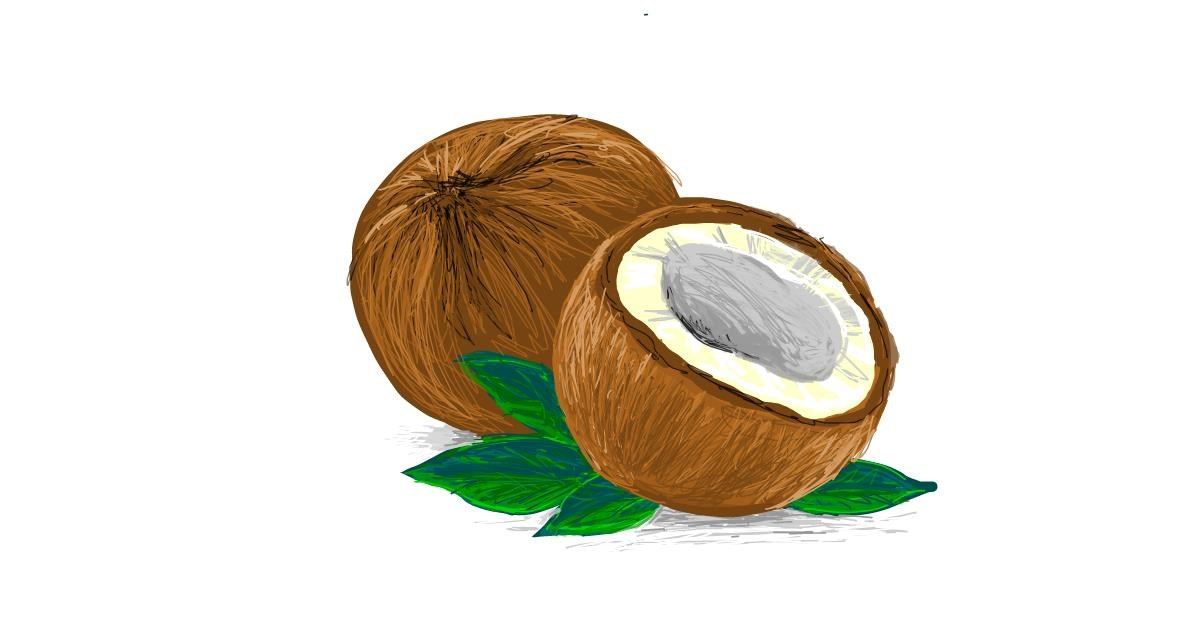 Drawing of Coconut by Scott