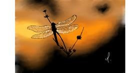 Drawing of Dragonfly by OLGI 🌺