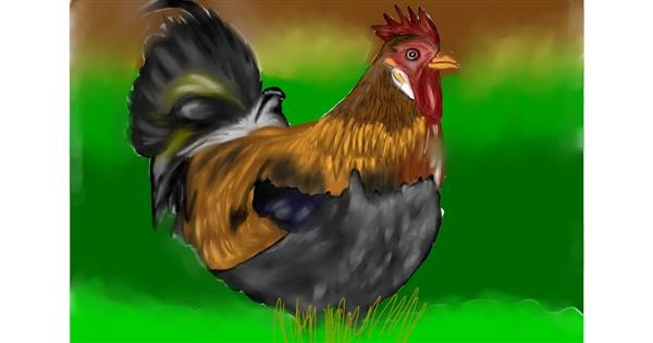 Chicken drawing by Jan
