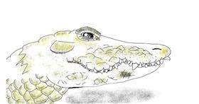 Alligator drawing by Tiny🍒