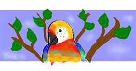 Parrot drawing by Caitlyn