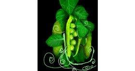 Peas drawing by Muni