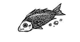 Fish drawing by HAHAH