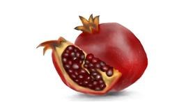 Pomegranate drawing by Jan