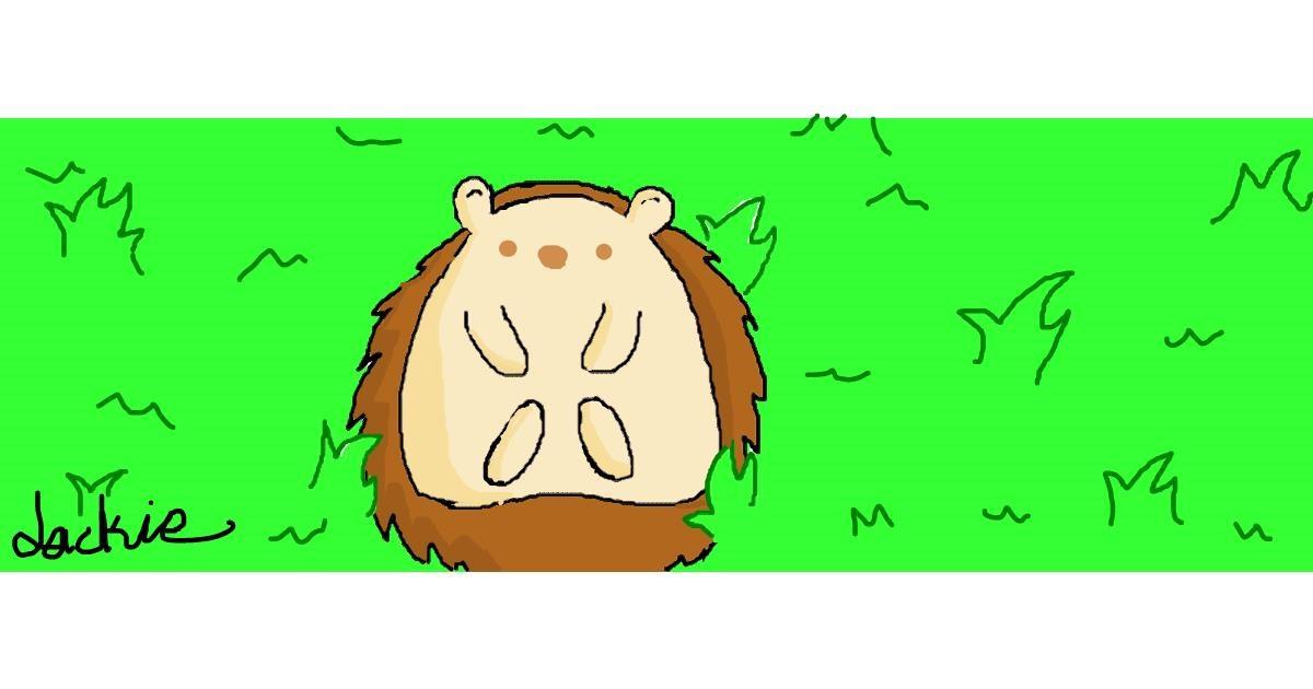 Hedgehog drawing by Jackie