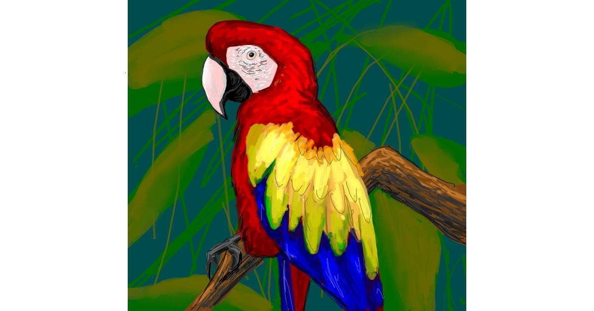 Parrot drawing by Scott