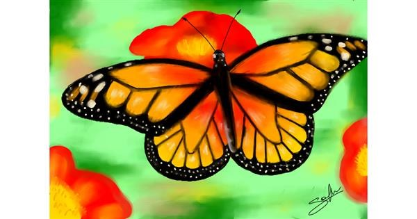Butterfly drawing by Sophie_draw24