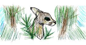 Kangaroo drawing by Nan
