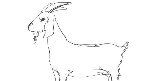 Goat drawing by Vicki