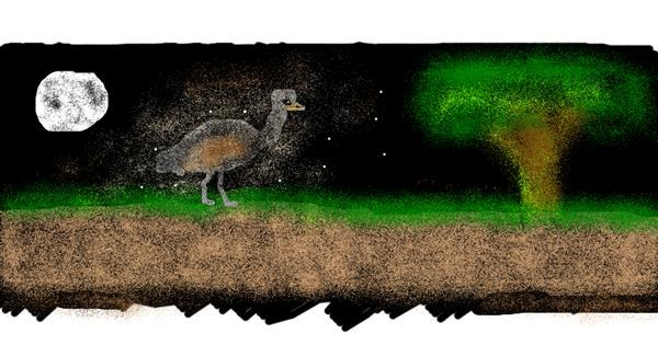 Ostrich drawing by Turtle