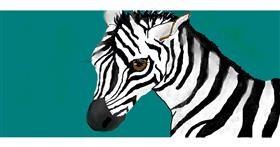 Zebra drawing by S.Elizabeth