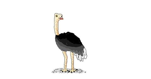 Ostrich drawing by coconut