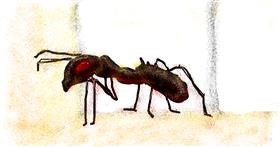 Ant drawing by cookie karr