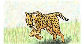 Cheetah drawing by Sam