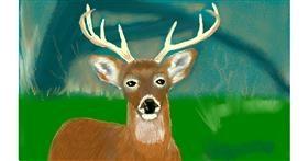 Drawing of Deer by Tim