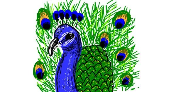 Peacock drawing by Geo-Pebbles