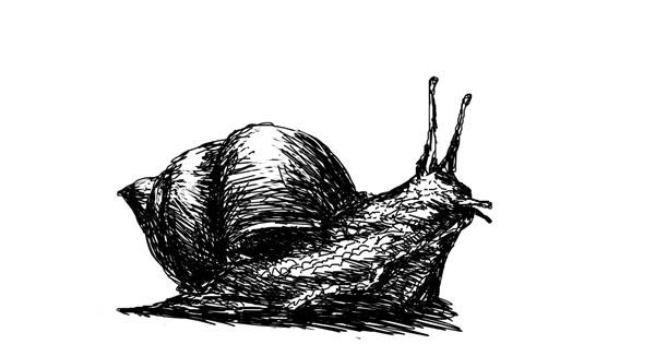 Snail drawing by Danielle