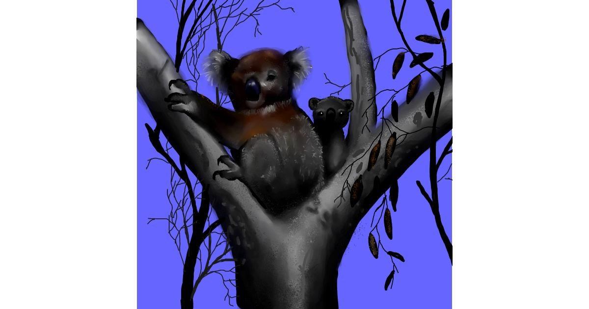 Drawing of Koala by Leah