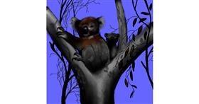 Koala drawing by Leah