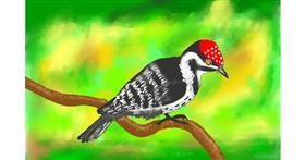 Woodpecker drawing by GJP