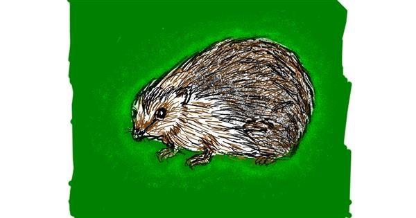 Hedgehog drawing by Cherri