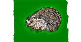 Hedgehog drawing by Cherri