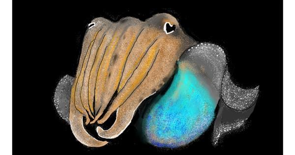 Cuttlefish drawing by SAM 🙄AKA Margaret