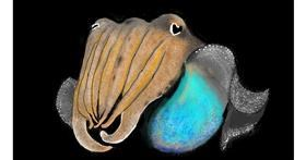 Cuttlefish drawing by SAM 🙄