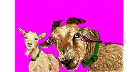 Goat drawing by Qt
