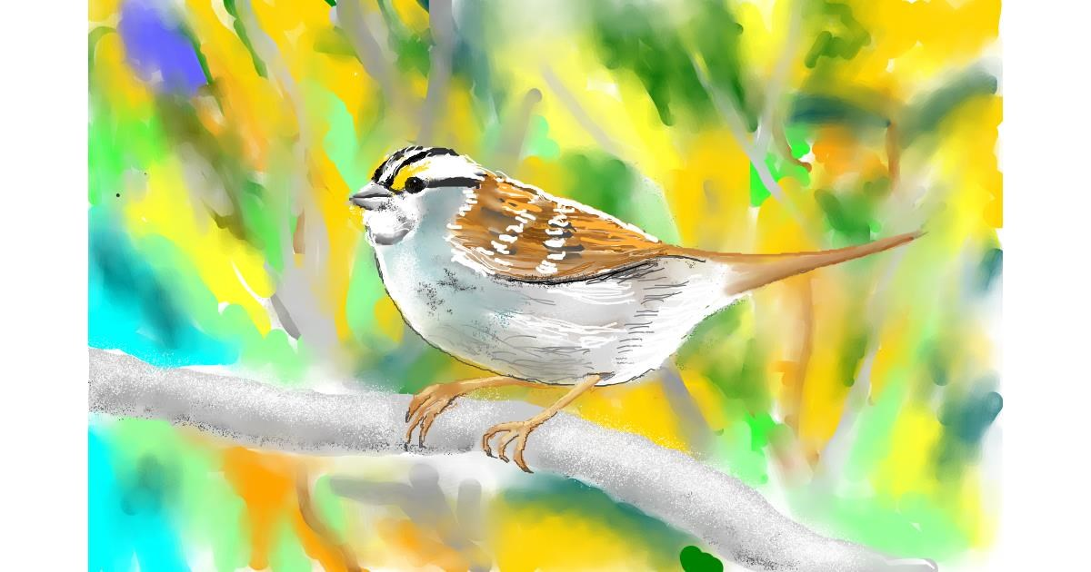 Sparrow drawing by GJP
