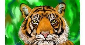 Tiger drawing by Tim