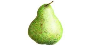 Pear drawing by 🇭🇰 Acem Lam