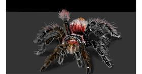 Spider drawing by teidolo