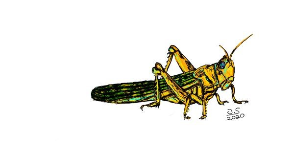 Grasshopper drawing by Tarantulana