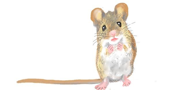 Mouse drawing by GJP
