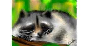 Raccoon drawing by Sophie_draw24