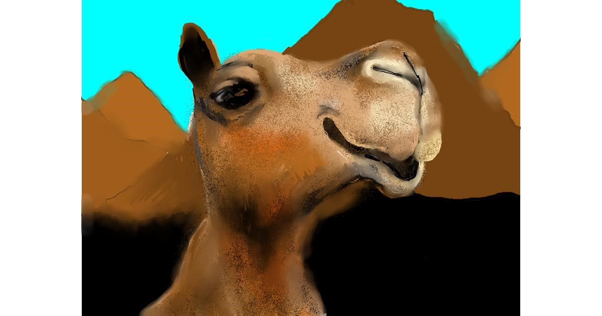 Drawing of Camel by SAM AKA MARGARET 🙄