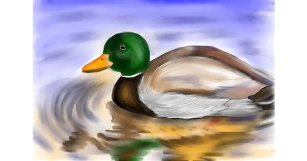 Duck drawing by Jan