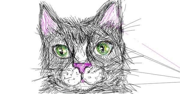 Cat drawing by Kiwi