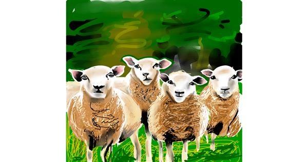 Sheep drawing by Rose rocket