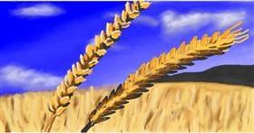Wheat drawing by Calaverita