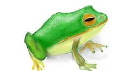 Drawing of Frog by Bro 2.0😎